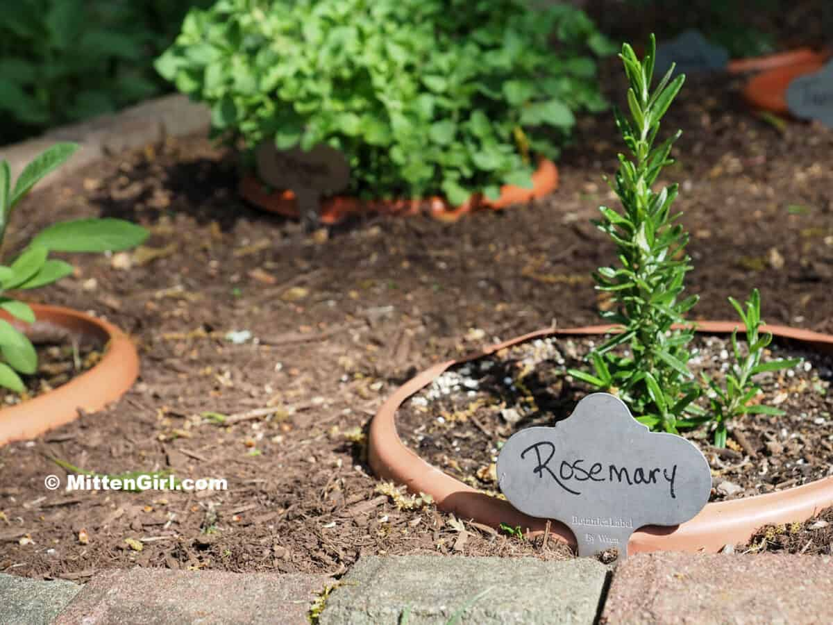 Pots of herbs sunk in the ground with metal tags marking the plants.