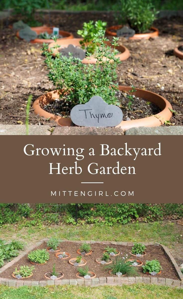 Growing a Backyard Herb Garden